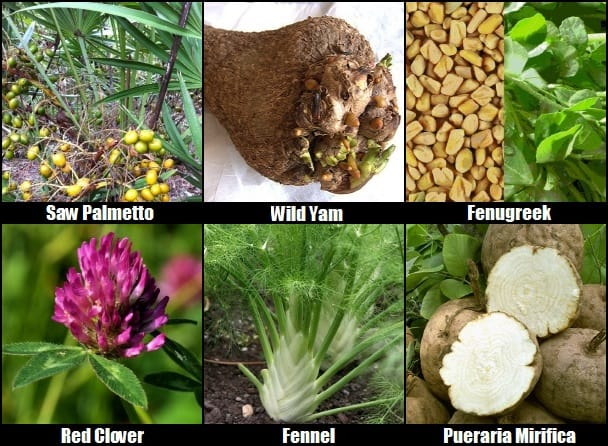 breast enhancement herbs